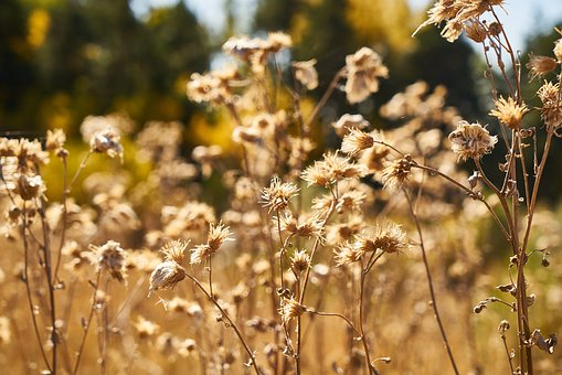 Autumn, Yellow, Plant, Dried Up, Dea, Ot, Forest, Day
