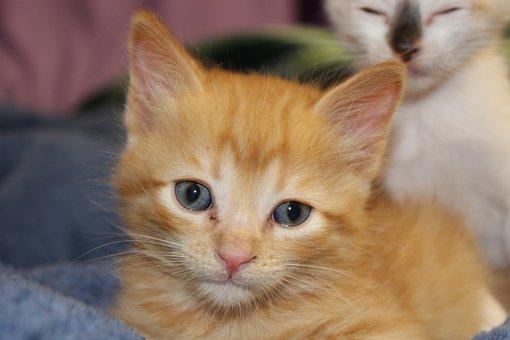 Cat, Puppy, Fel, Feline, Kitten, Animal, Cute, Animals
