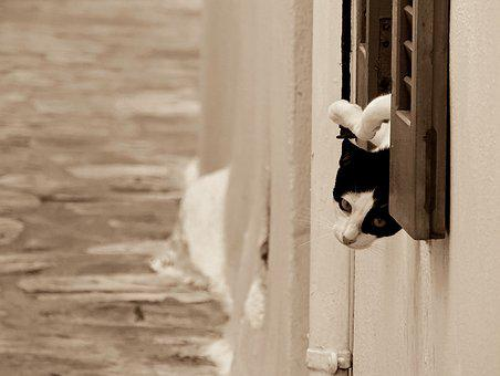 Cat, Cats, Feline, Felines, Animal, Animals, Black Cat