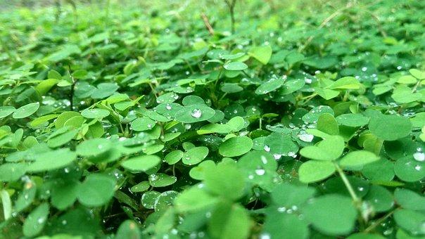 Kerala, Green, Grean Leaves, Nature, Natural, Garden