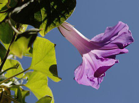 Hibiscus, Marshmallow, Blossom, Bloom, Flower, Mallow