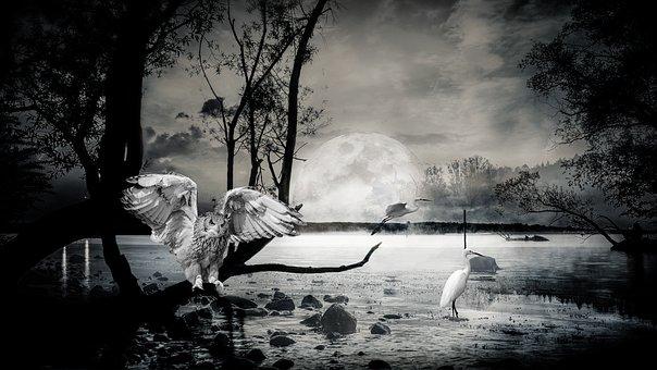 Composing, Lake, Ibis, Owl, Atmospheric, Night, Moon