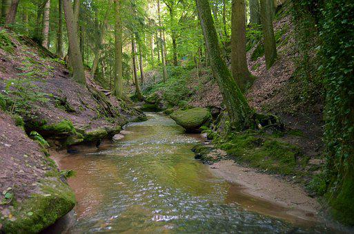 Forest, Green, The Brook, Water, Gorge, Nature