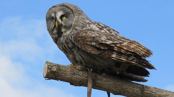 Zoo Beauval, Owl, Animal