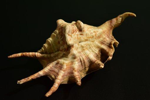 Shell, Mollusk, Snail, Invertebrate, Pattern, Spiral