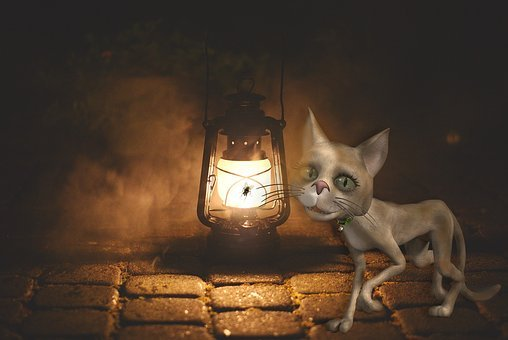 Cat, Replacement Lamp, Lighting, Mood, Street Lamp, Oil
