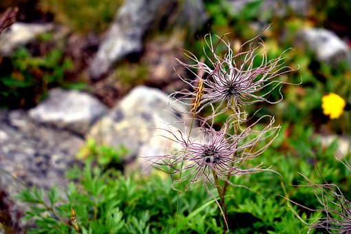 Flower, Mountain, Nature, The Stones, Hiking Trail