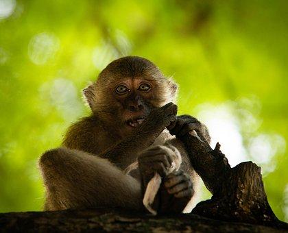 Monkey, Thailand, We're Going, Eyes, Animals, Jungle