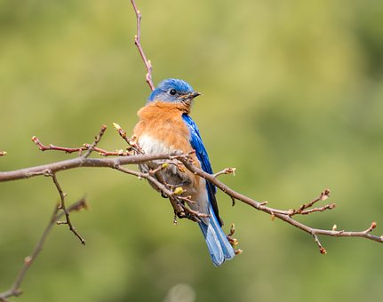 Blue Bird, Bird, Bird On The Tree, Little Bird