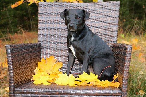 Patterdale Terrier, Terrier, Dog, Black, Pet, Autumn