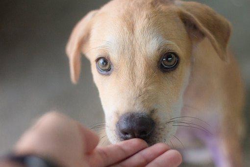 Dog, Animals, Cute, Pets, Puppy, Intelligent Dog, Relax