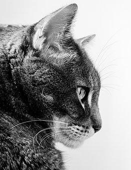 Cat, Cats, Feline, Felines, Animal, Animals, Pet
