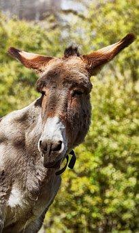 Donkey, Animal, Animals, Country Life, Mule, Head