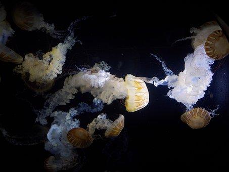 Jellyfish, Aquarium, Kamo Aquarium