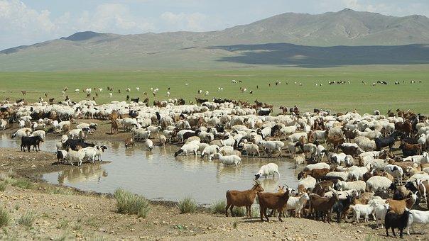 Mongolia, Yangttae, Nomadic