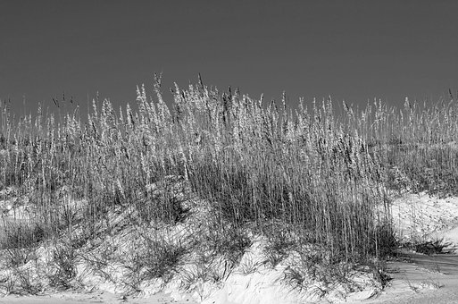 Sea Oats, Sand Dune, Sand, Sea, Beach, Ocean, Florida