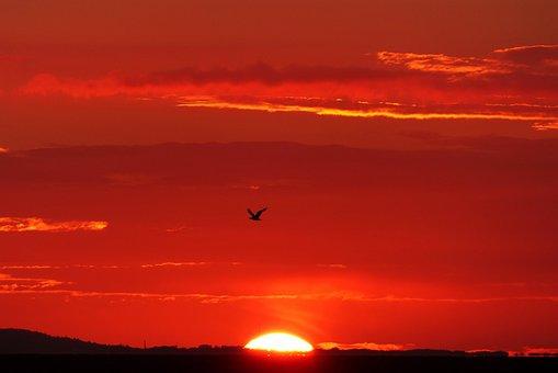 Glowing, Back Light, Bird, Seagull, Sunset, Evening Sky
