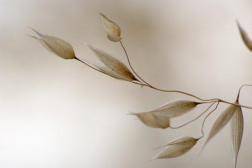 Oats, Brightfield, Grass, Dried Nature, Light