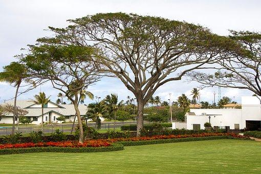 Hawaii, Oahu, Garden, Canopy, Tree, Temple Grounds, Lds