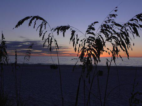 Sunset, Tropical, Sea Oats, Beach, Water, Sky, Colorful