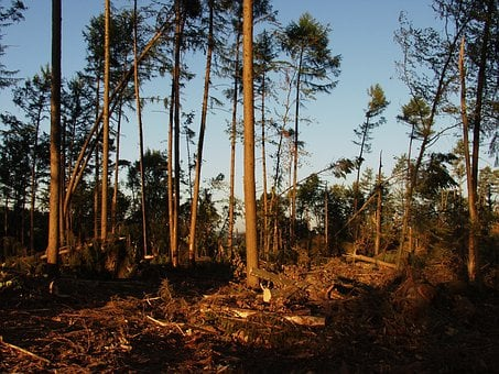 Storm Damage, Forest, Trees, Force Of Nature, Storm