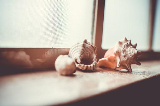 Shelf, Collection, Shells, Windowsill, Molluscs