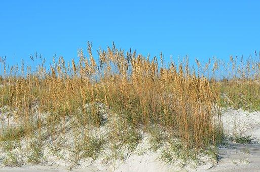 Sea Oats, Sand, Dunes, Sea, Beach, Ocean, Nature