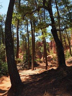 Pine Forest, Pine, Forest, Ocher Rocks, Ocher