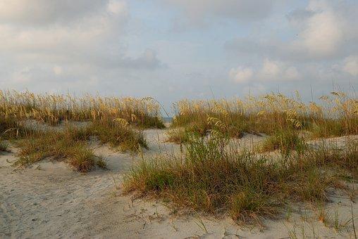 Sea Oats, Sand Dune, Beach, Sea, Sand, Ocean, Nature