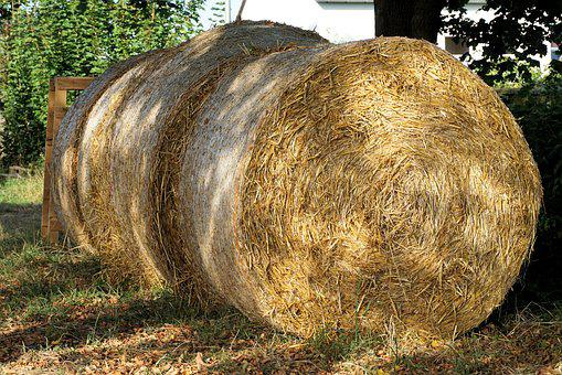 Straw, Round Bales, Harvest, Agriculture, Straw Bales
