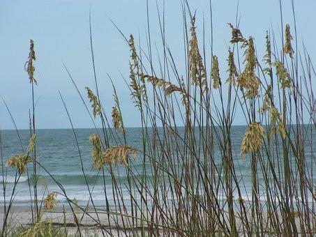 Sea, Oats, Water, Landscape, Seascape, Surf