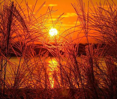 Sundown, Sunset, Gold, Golden, Sea, Oats, Wheat, Nature