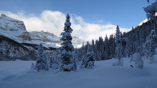 Nature, Alberta, Canada, Winter, Banff, National Park