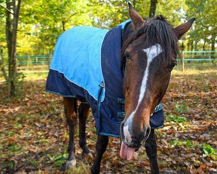 Horse, Language, Animal, Coat
