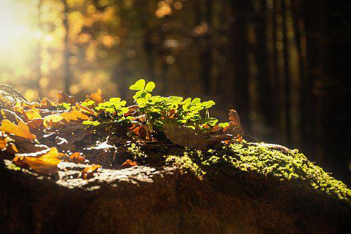 Forest, Detail, Close, Nature, Leaf, Green