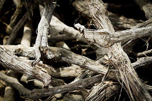 Wood, Trunks, Lena, Tree, Nature, Cut Trunk, Bark
