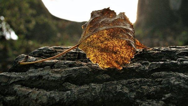 Morning, Dry Leaf, Speckled, Autumn, Nature, Park