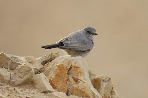 Bird, Gray, Israel, Martha Large, Beauty, Natural