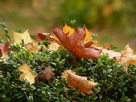 Nature, Time Of Year, Autumn, Golden Autumn