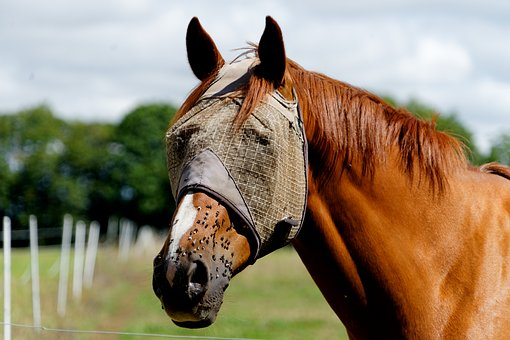 Horse, Nostrils, Horseback Riding, Equine, Horse Head