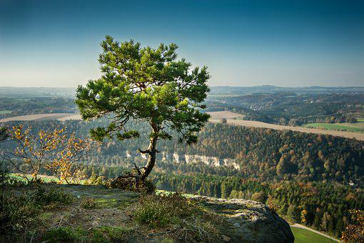 Pine, Tree, Alone, Rock, Elbe Sandstone Mountains