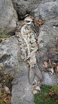 Lake, Dam, Skeleton, Bones, Nature