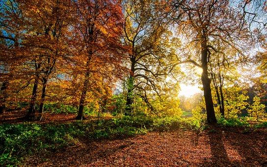 Autumn Leaves, Fall Leaves, Sunrays, Sunshine, Radiance