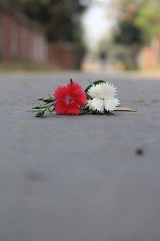 Daisy, Flower, Blossom, Blooming, Plant, Spring, Summer
