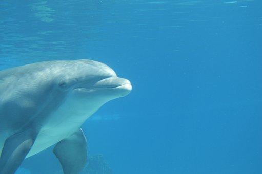 Water, Dolphin, Blue, Mammal, Ocean, Marine, Sea