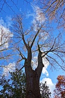 Tree, Trunk, Branches, Bark, Tree Top, Bare Tree