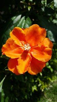 Orange, Colours, Garden, Sunny, Day, Bright, Green