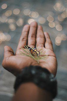 Hand, Butterfly, Moody, Bokeh, Conceptual, Freedom