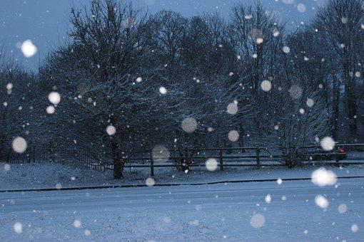 Snow, Dark, Snow Storm, Tree, Cold, Landscape, Outdoor