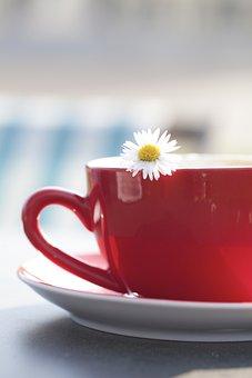 Cup, Tee, Margarite, Flower, Coffee, Teacup, Drink